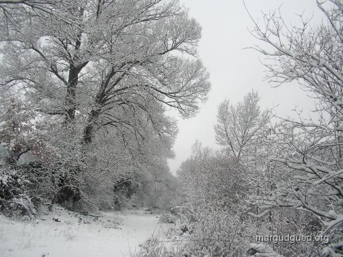 2007-1-25-5-margudguedorg1